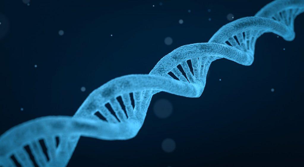 dna, string, biology